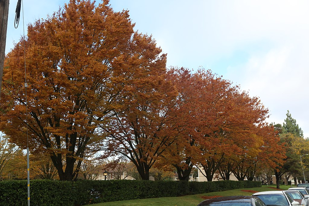 fall trees at commercial property