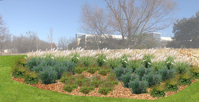 drought tolerant plants for landscape in Dallas