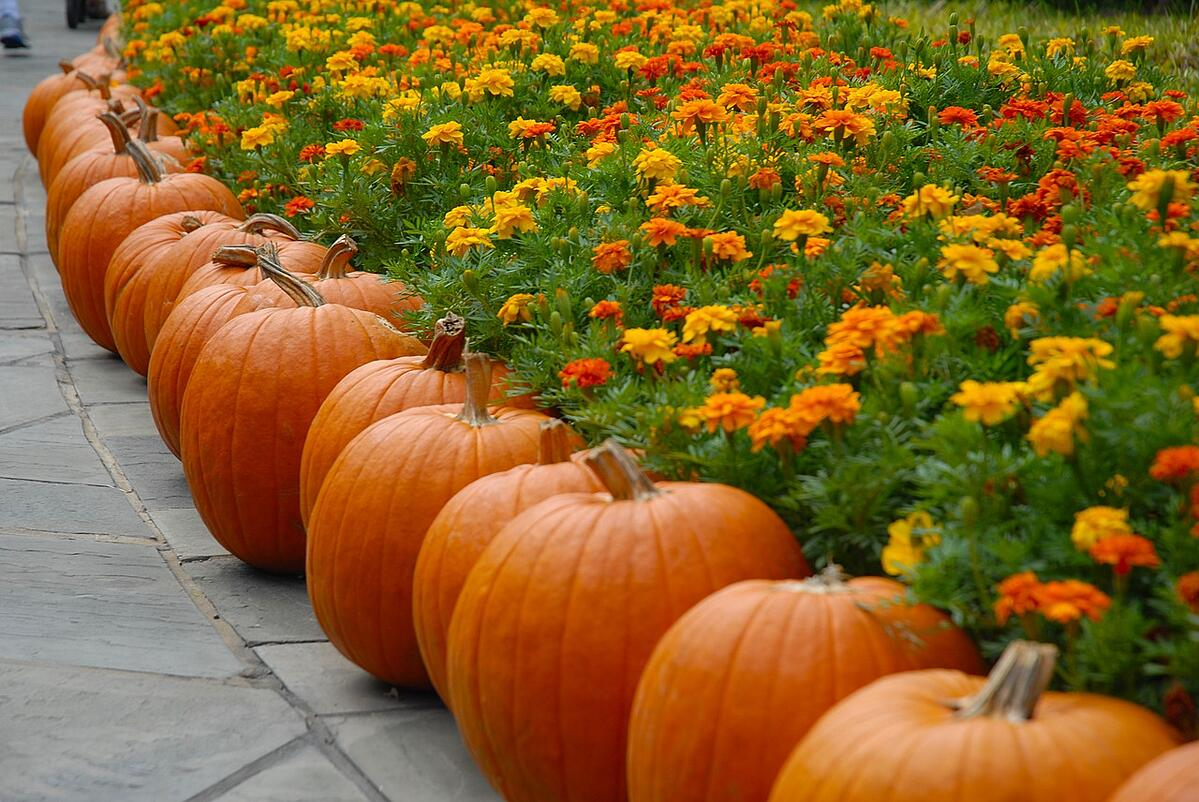 pumpkins and flowers add fall color to walkway