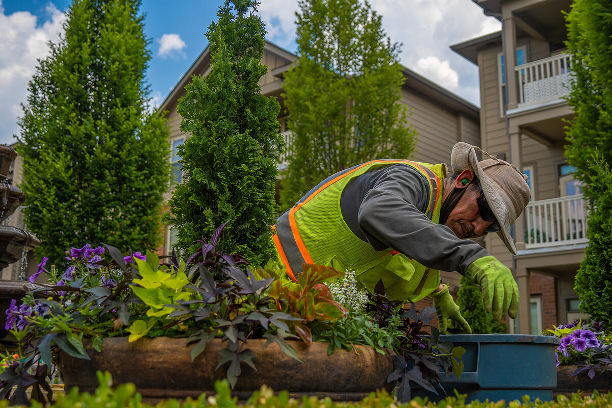 Commercial landscaper maintain container gardens