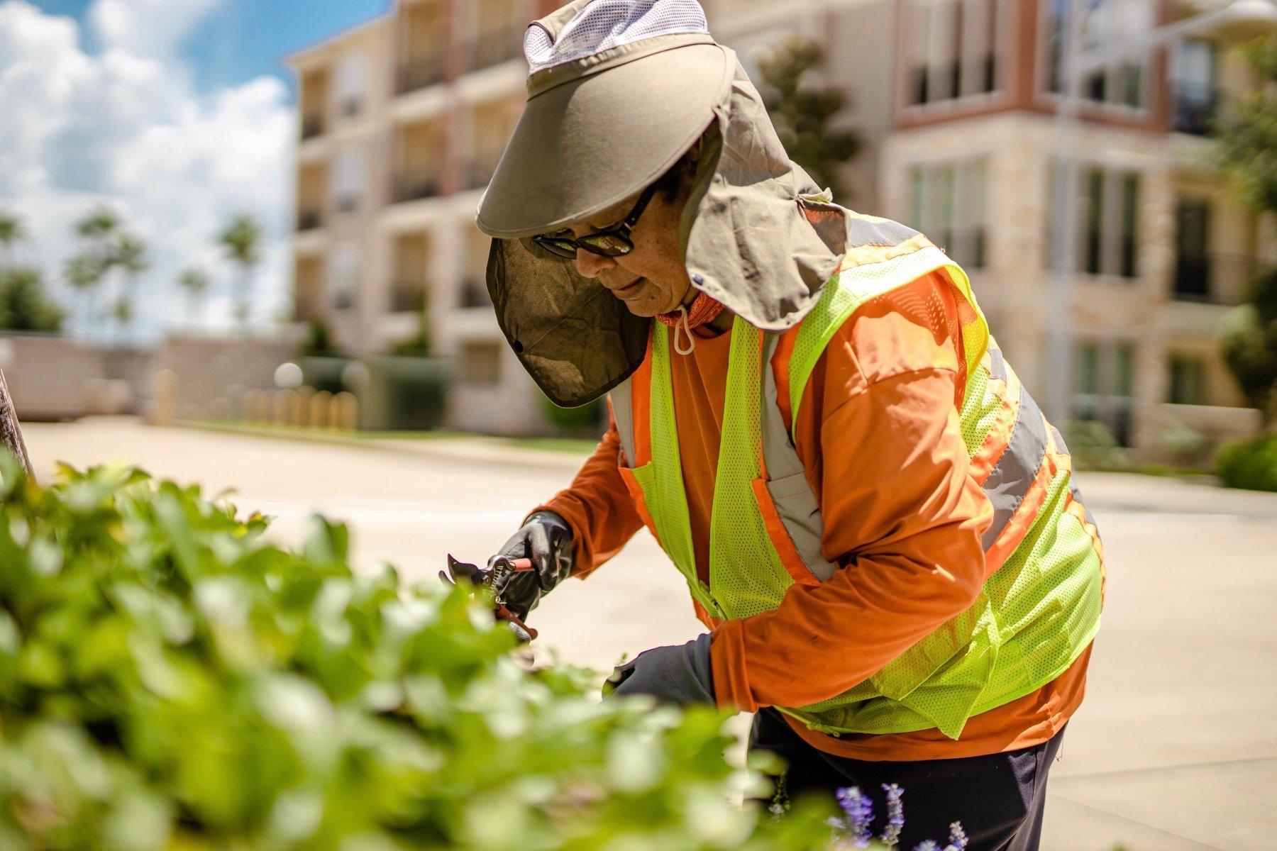 Commercial landscape maintenance crew pruning shrubs