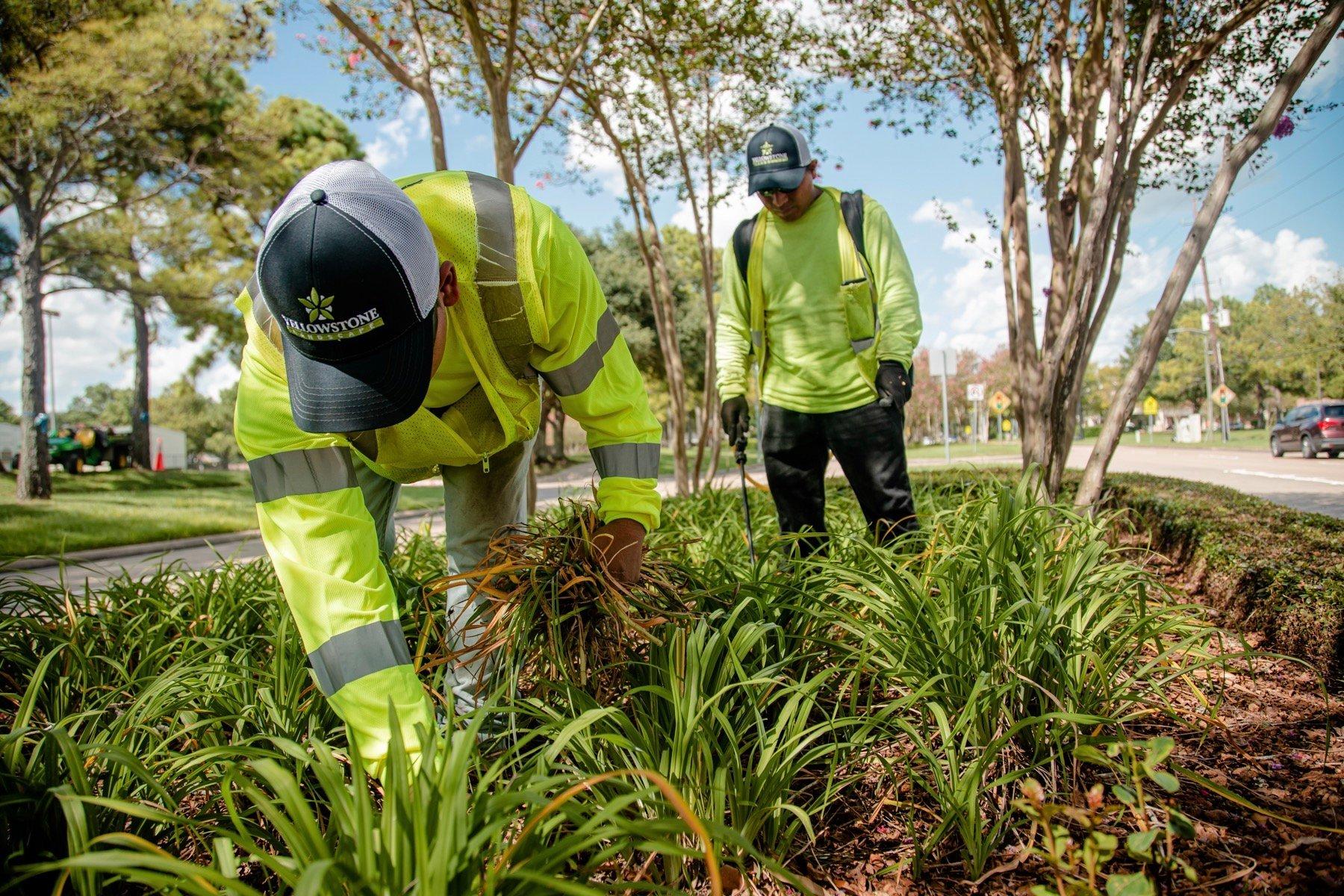 Landscape maintenance crew weeding a landscape bed