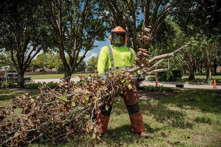 commercial tree service crew branch removal