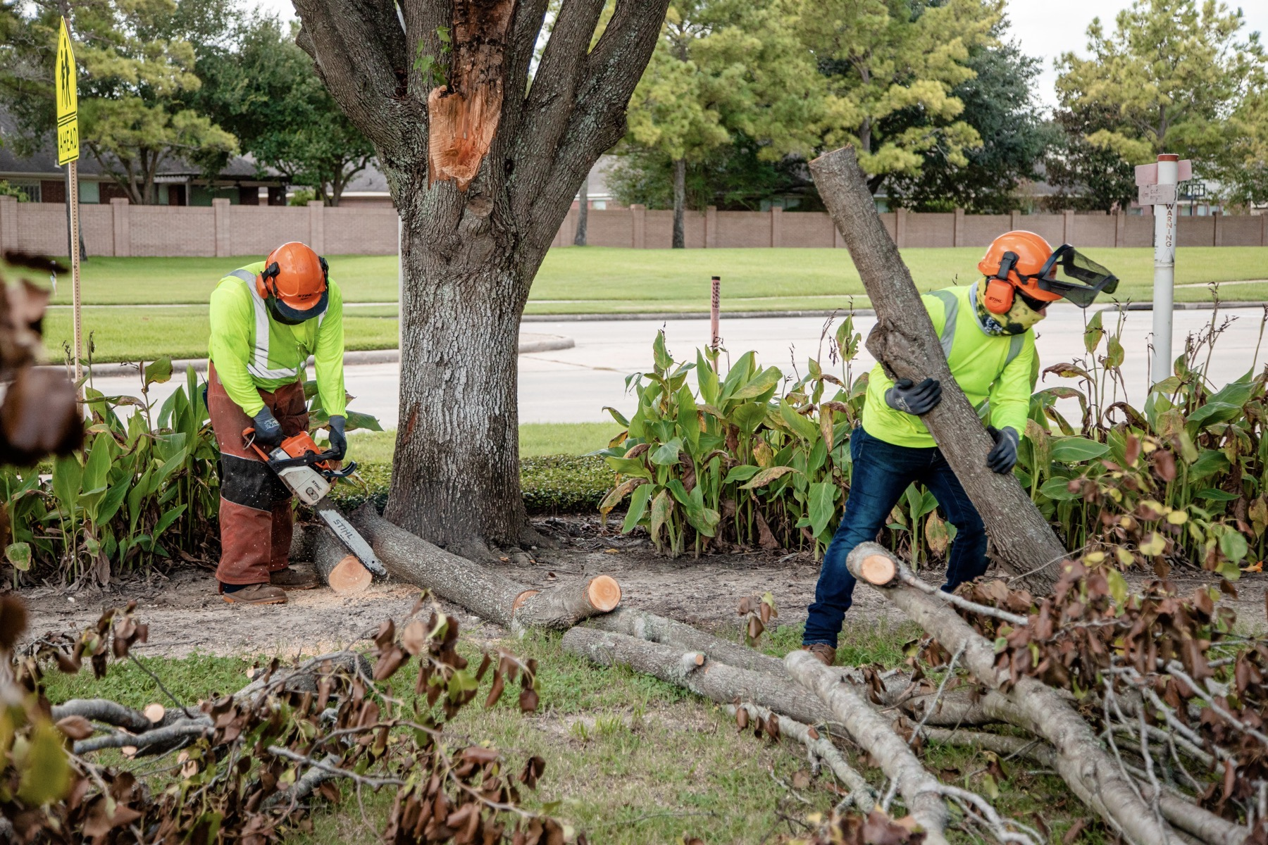 Tree service team cleaning up fallen branches