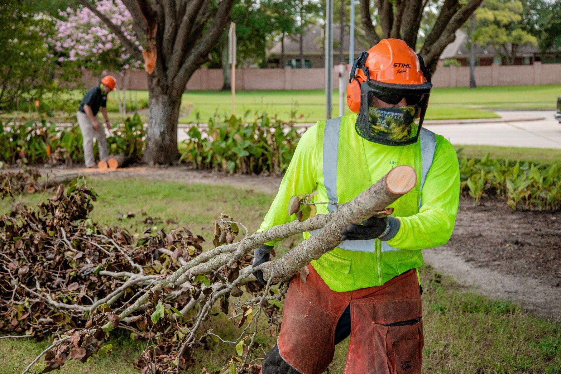 Tree care team pruning and removing tree limbs