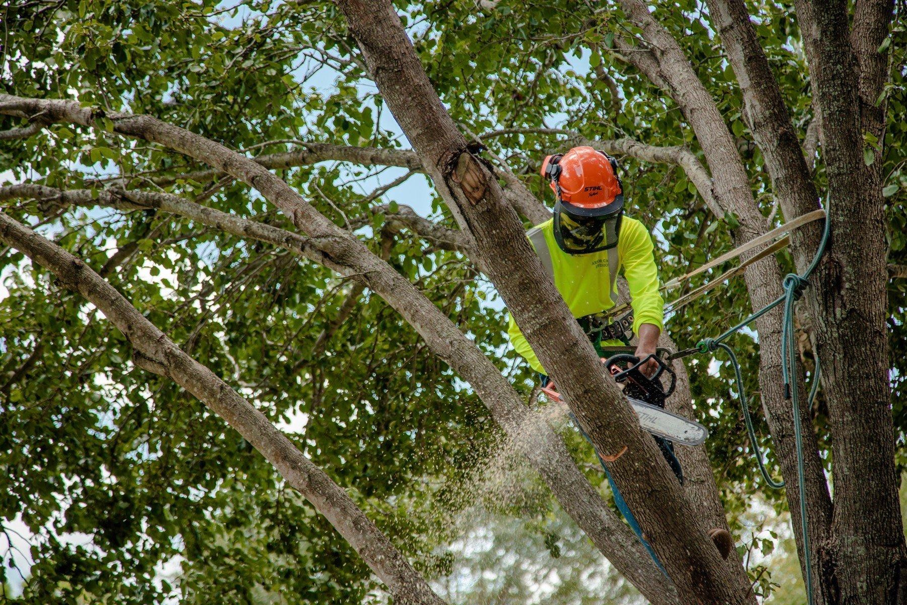 Tree limb pruning