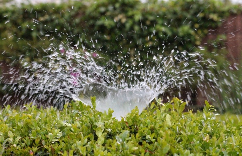Sprinkler water plants