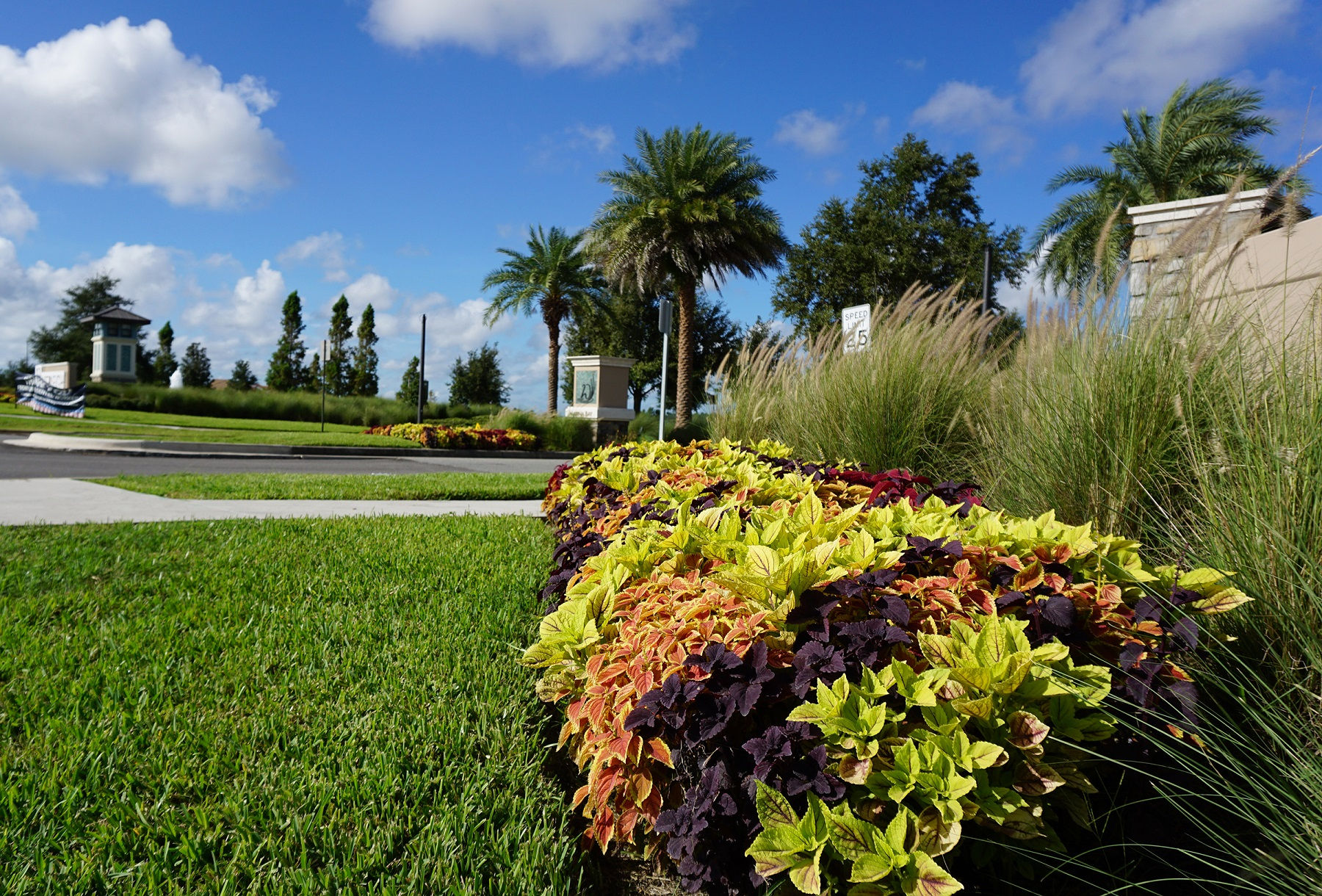 Drought tolerant plants for Dallas Texas landscape